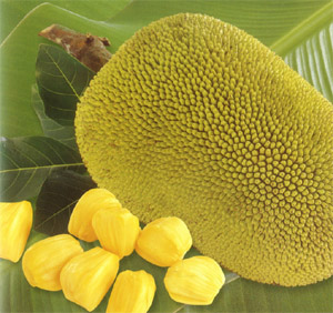 "Jackfruit der Sorte ""yellow flesh"""